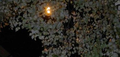 Blätter nachts